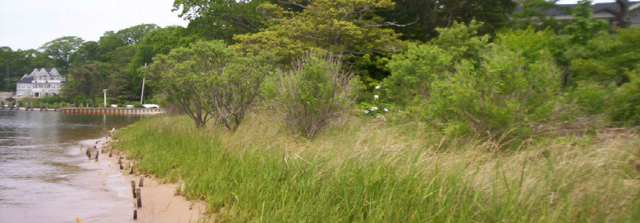 Island Heights natural shoreline enhanced by the Ocean County Soil Conservation DIstrict