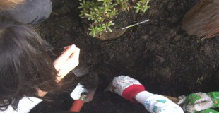 Children plant a tree for a rain garden at Washington Street School in Toms River