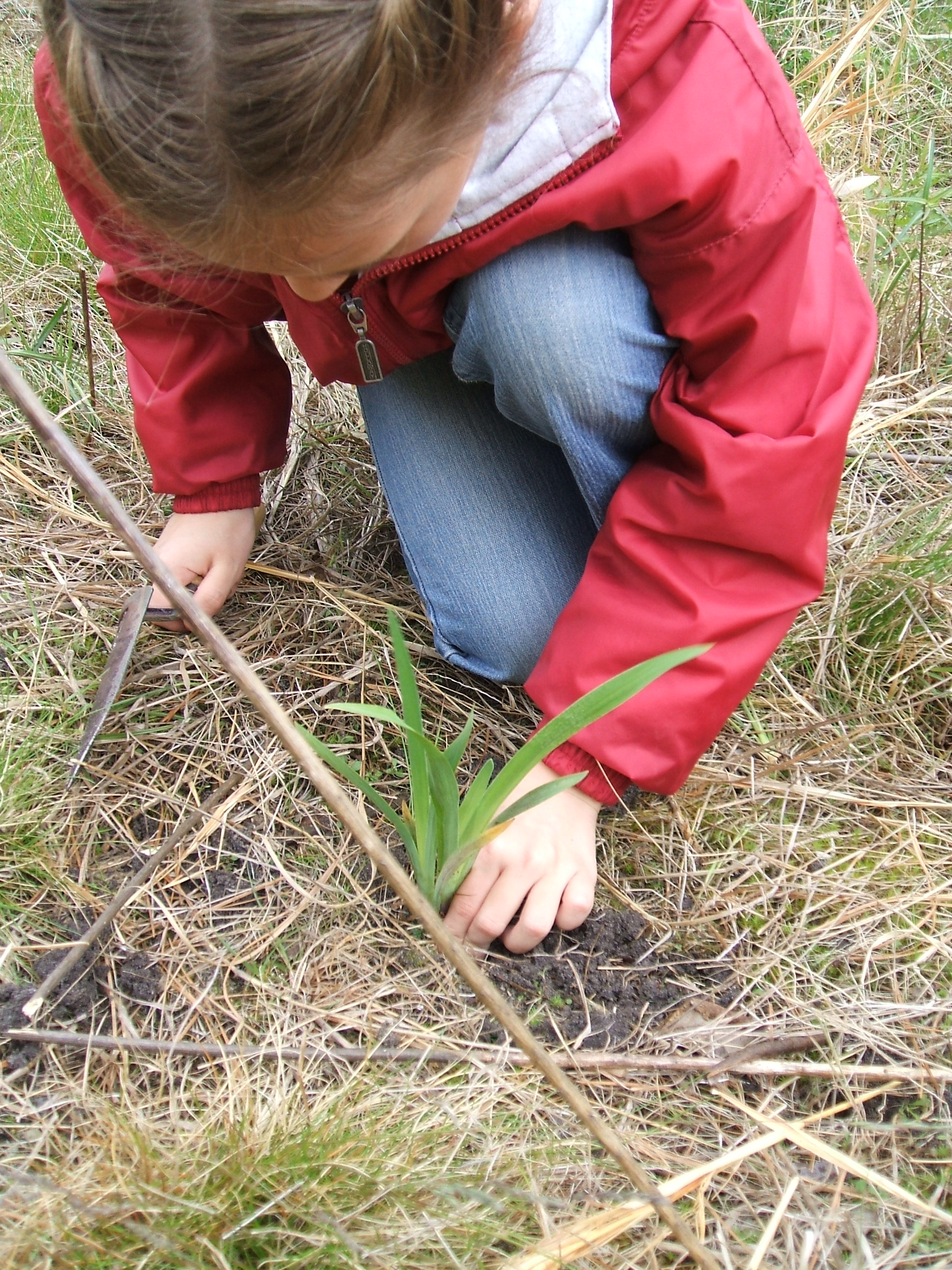 Student planting in the outdoor classroom for her elementary school
