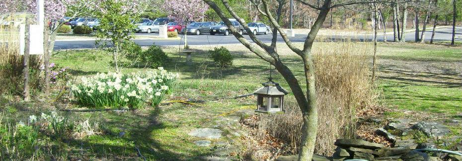 Rain Garden at Eagleswood Elementary School