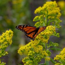Choosing the right plants will naturally repel pests and attract butterflies.