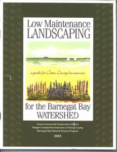 Low Maintenance Landscaping Guide