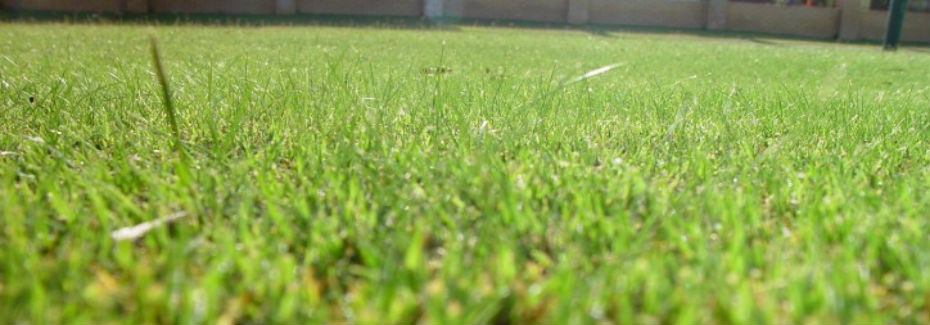 mown-lawn-insects-eye-view_w725_h544