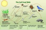 soil-food-web1