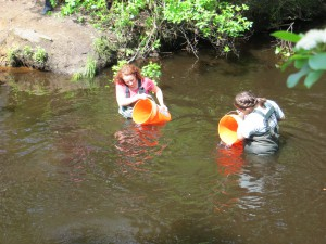 Trout are released into the headwaters of the Toms River at the Forest Resource Education Center in Jackson, NJ.