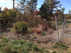 The sun garden for the SHiP Project at Jake's Branch County Park includes native perennials, grasses as well as trees and shrubs that thrive in high sun environments.