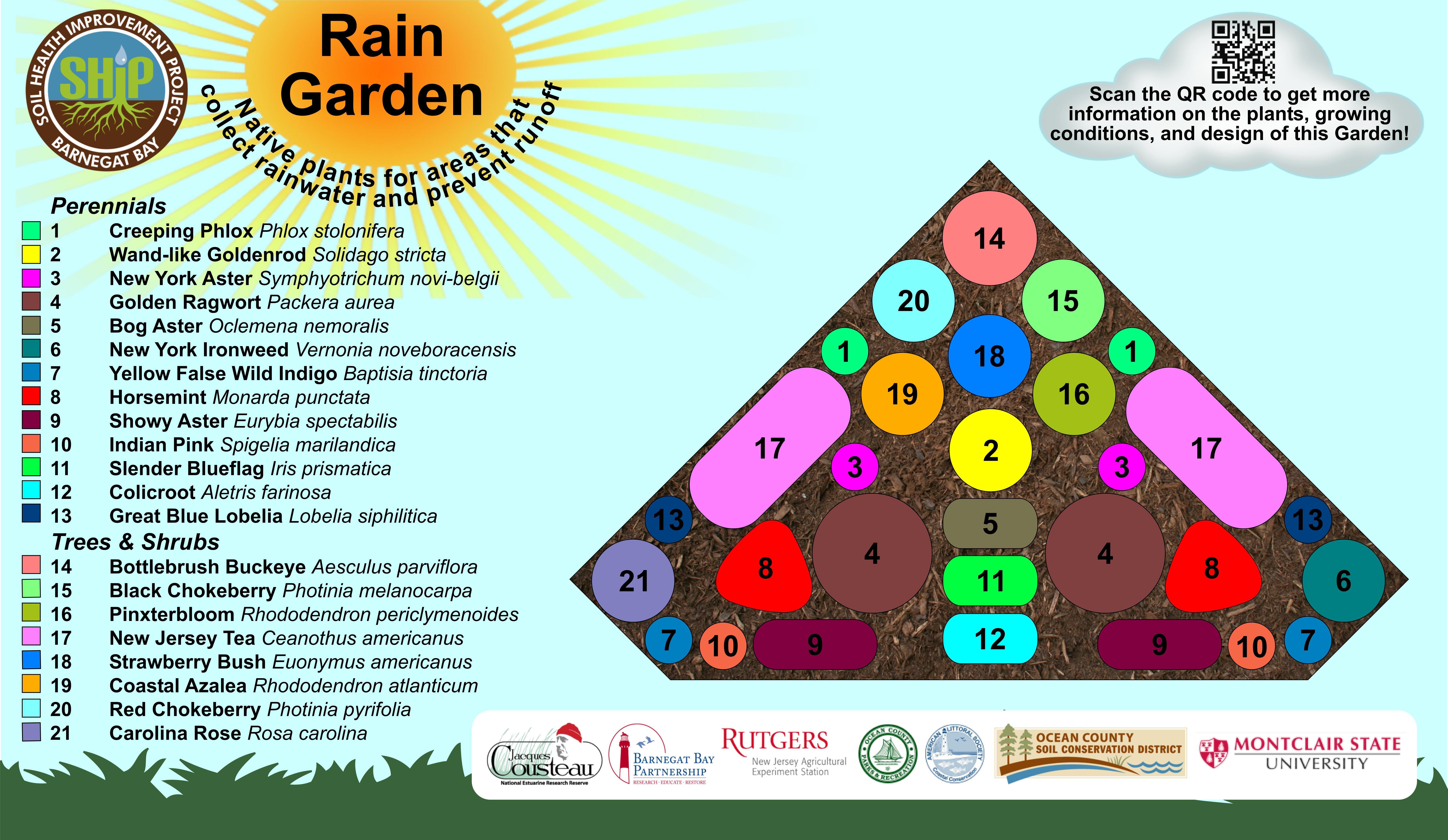 Jakes Branch Rain Garden – Rain Garden Plants