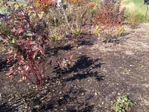 The demonstration wet garden